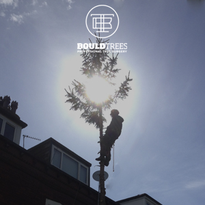 Bould Trees 2